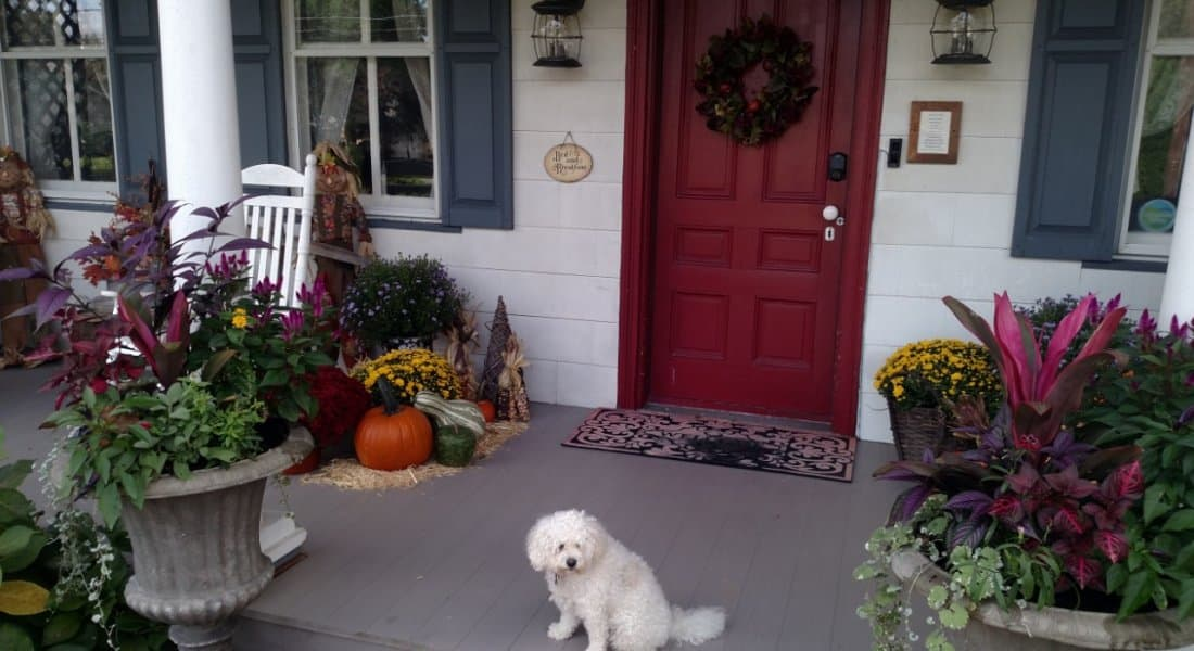 front porch with fall decor and white dog
