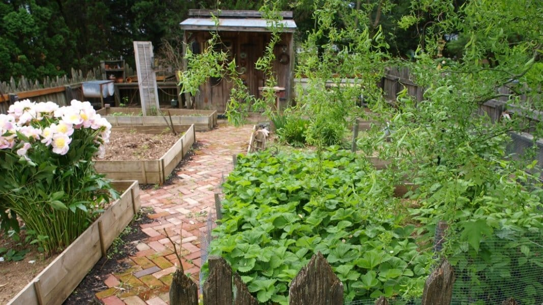 garden with potting shed and brick walk way