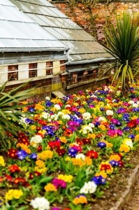 Colorful photo of Primula flower border