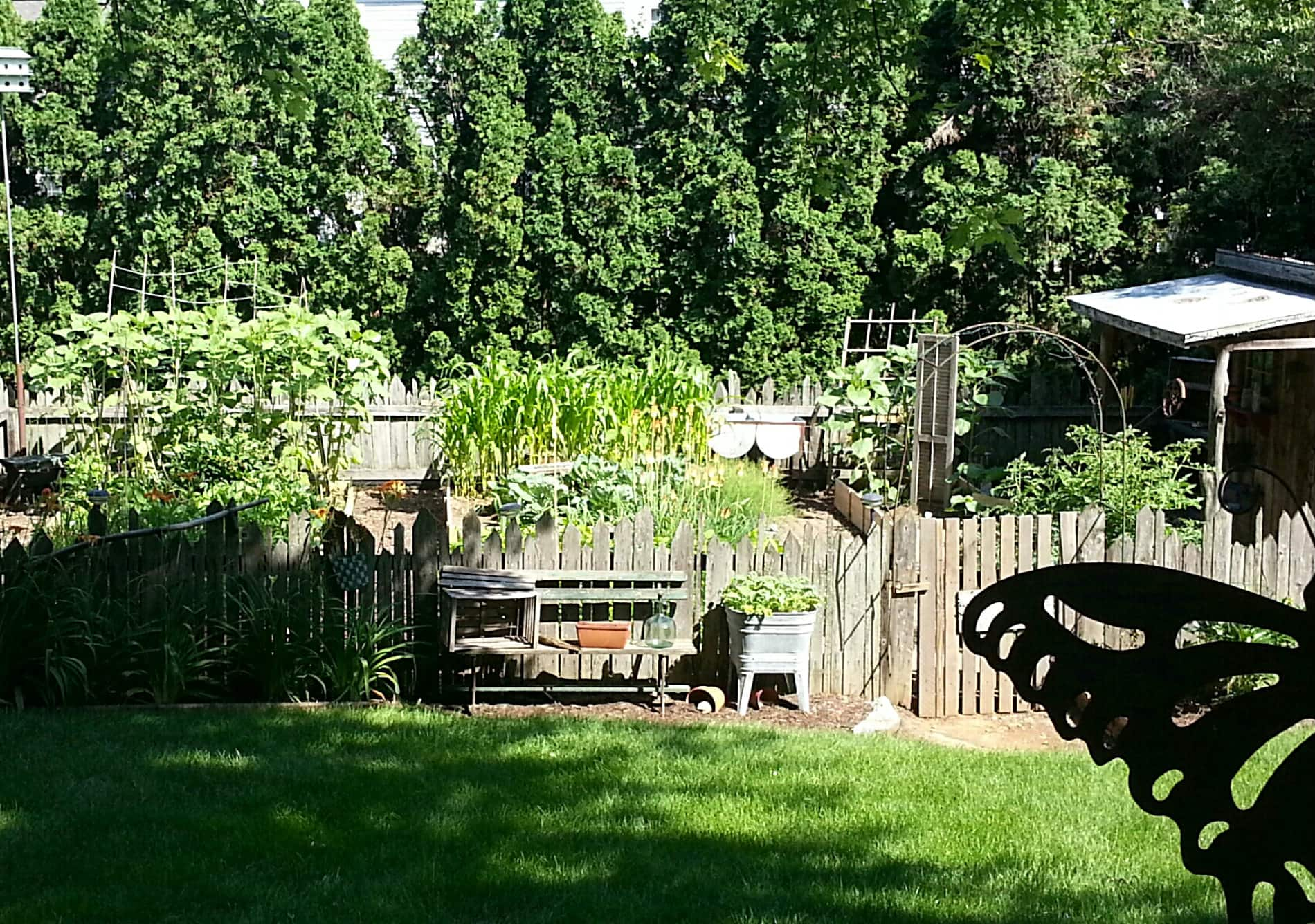 Picture of the back yard.